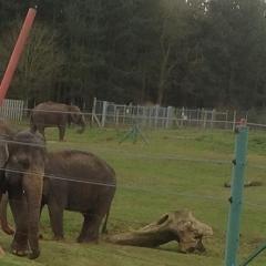 zoo13.jpg